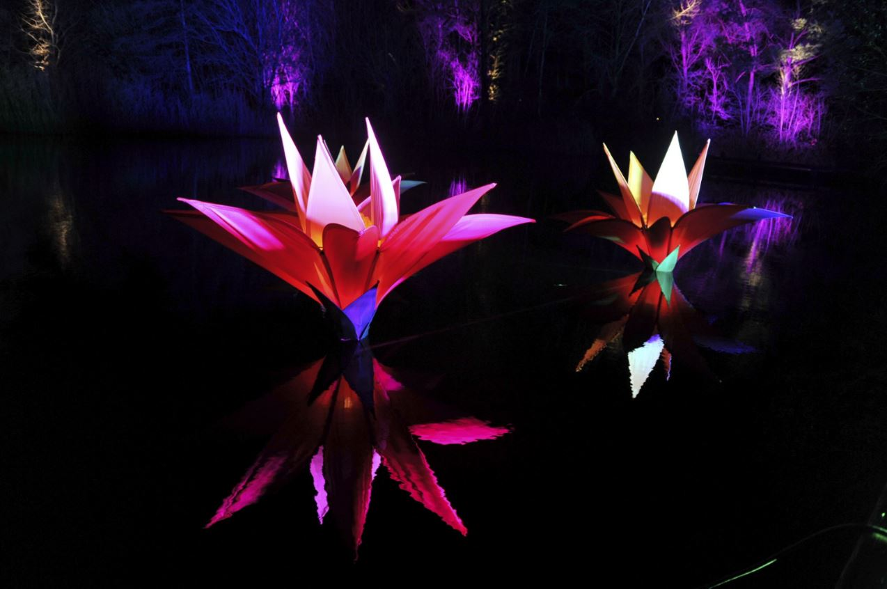 Malvern Winter Glow flower sculptures